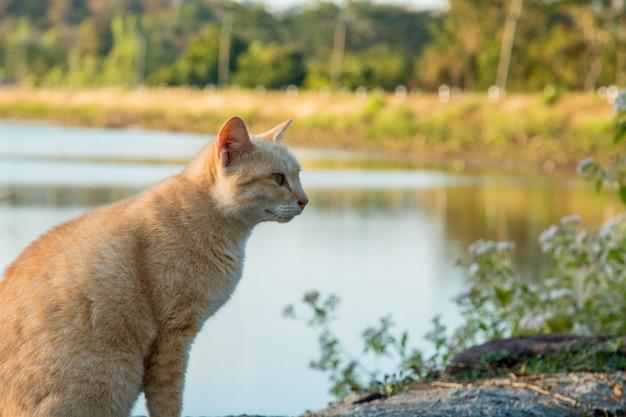 Gatos que vivem na natureza do parque.