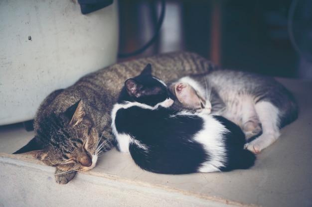 Gatos sonolentos, imagem de filtro vintage