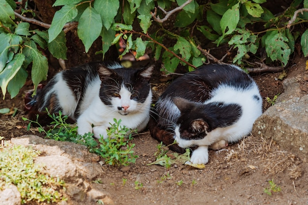 Gatos vadios dormem nos arbustos