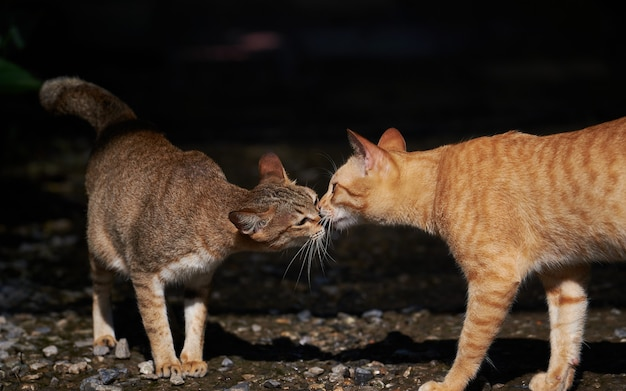 Gatos vadios se cumprimentam