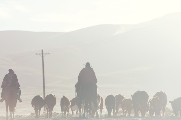 Gaúchos e rebanho de cabras nas montanhas da patagônia, argentina