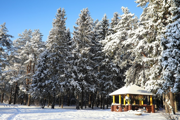 Gazebo de madeira na floresta em um dia ensolarado de inverno