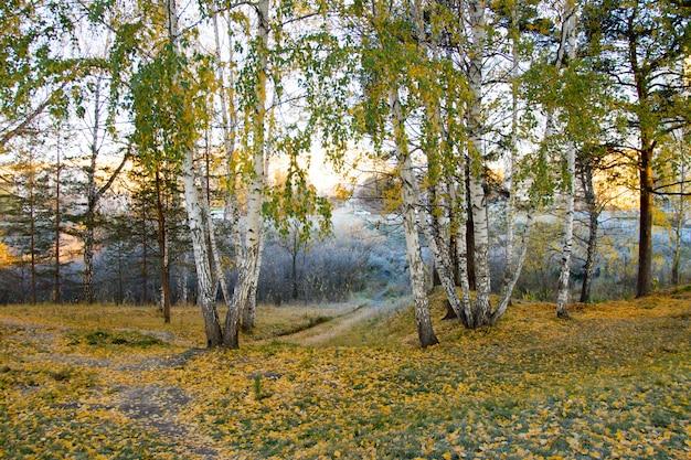 Geada da manhã de outono