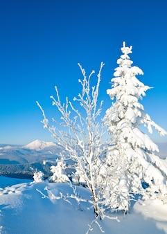 Geada de inverno e pinheiros cobertos de neve na encosta da montanha (montanhas dos cárpatos, ucrânia)