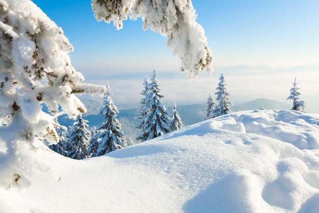 Geada de inverno e pinheiros cobertos de neve na encosta da montanha
