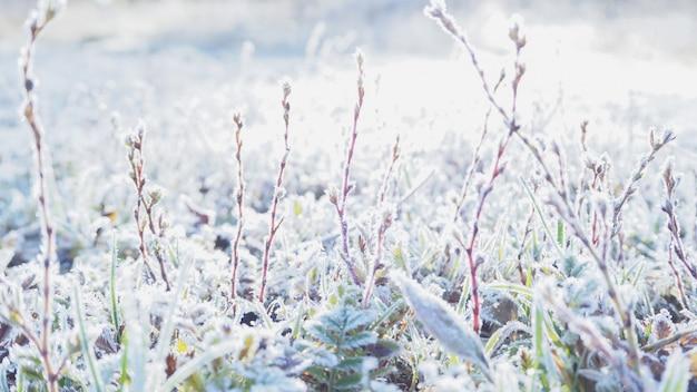 Geada matinal na grama fundo com grama, geada e sol de inverno