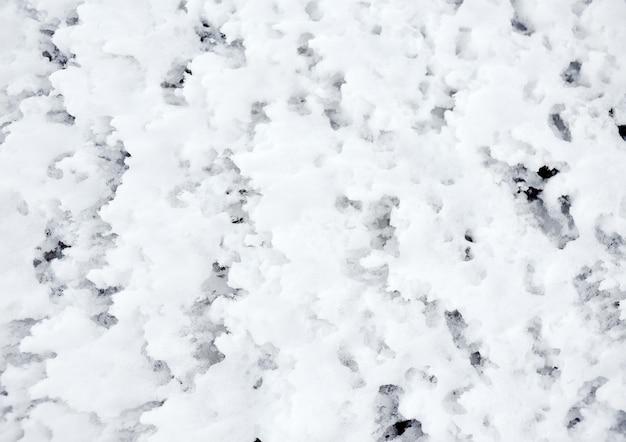 Gelado de espuma na costa do mar báltico. textura de fundo