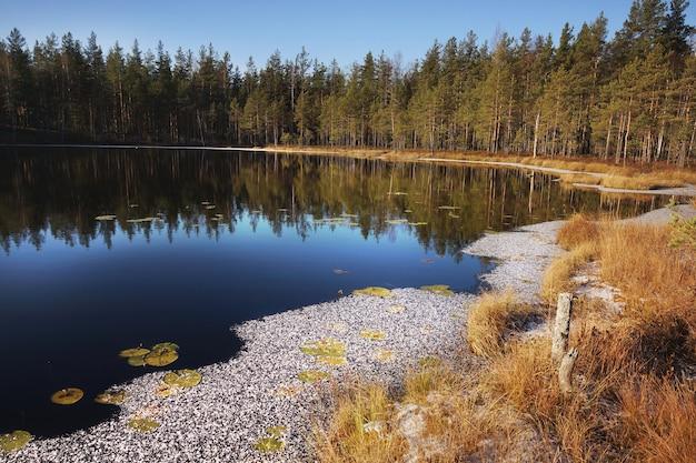 Gelo coberto de neve na margem do lago da floresta, grama amarela de outono