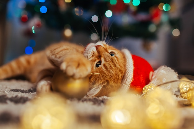 Gengibre gato usa chapéu de papai noel debaixo da árvore de natal, brincando com luzes e bola. conceito de natal e ano novo