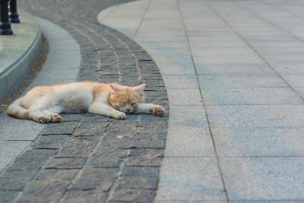 Gengibre perdido gato dormindo na calçada.