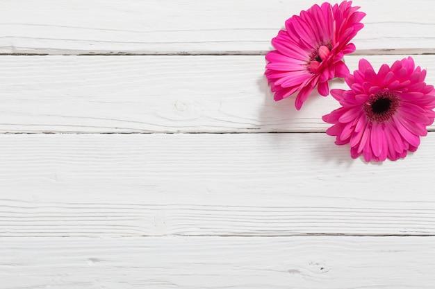 Gerber rosa em branco espaço de madeira
