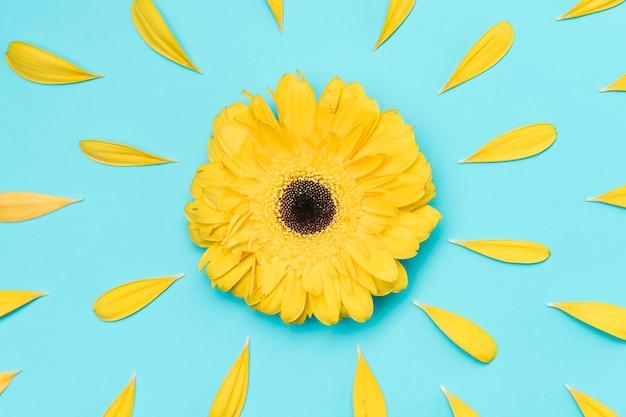 Gerbera amarela vista superior