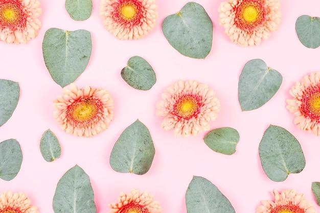 Gerbera flor e folhas verdes padrão no pano de fundo rosa