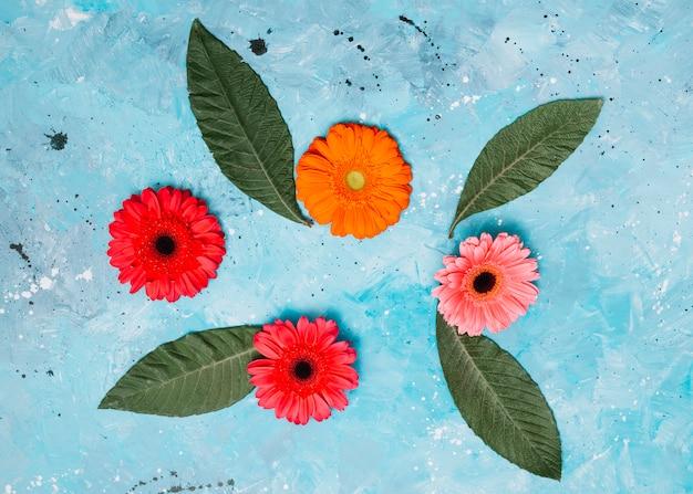 Gerbera flores com folhas verdes na mesa