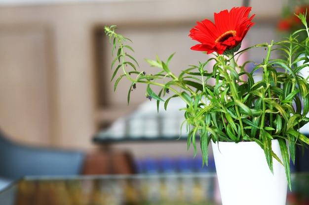 Gerbera vermelha ou margarida barberton flores em vaso de cerâmico branco