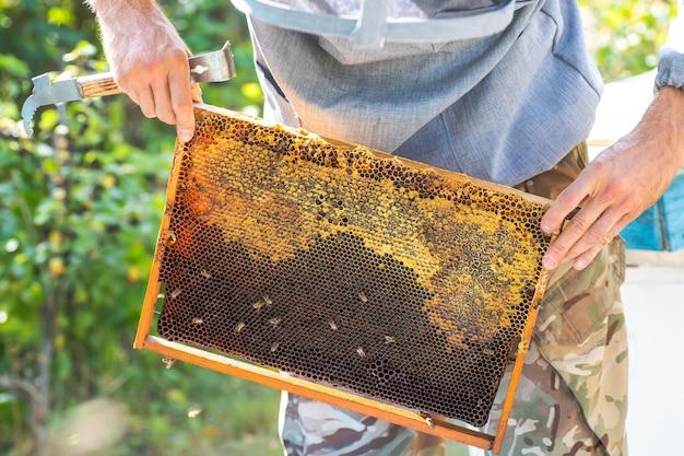 Gerenciamento da primavera da colmeia. apicultura antes da coleta de mel.