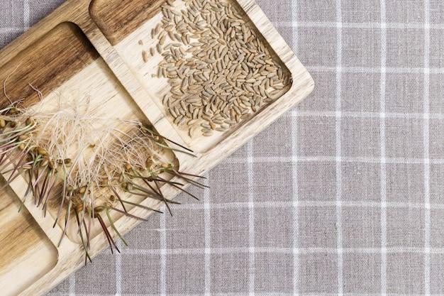 Germinação de sementes de trigo para alimentação. alimentos saudáveis, brotos de trigo são extremamente úteis para o corpo humano.