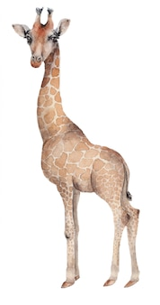 Girafa desenhada de mão