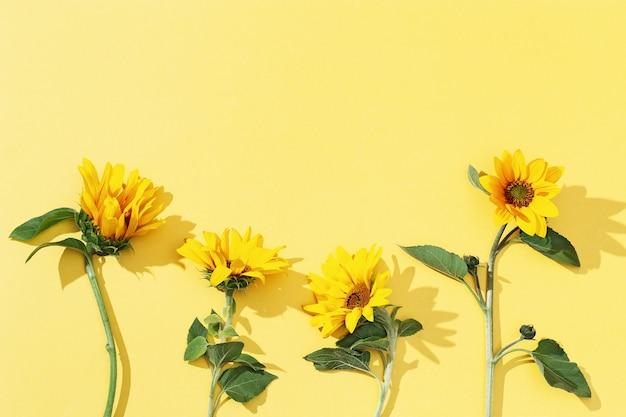 Girassóis amarelos flores desabrochando de outono brilhantes com espaço de cópia
