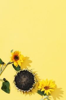 Girassóis e sementes de flores amarelas desabrochando em fundo de papel com espaço de cópia