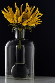 Girassol em um frasco com água em fundo preto