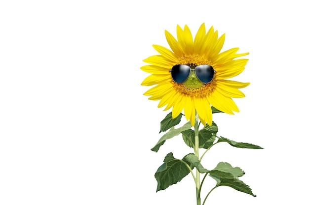 Girassol engraçado com óculos de sol em um fundo branco