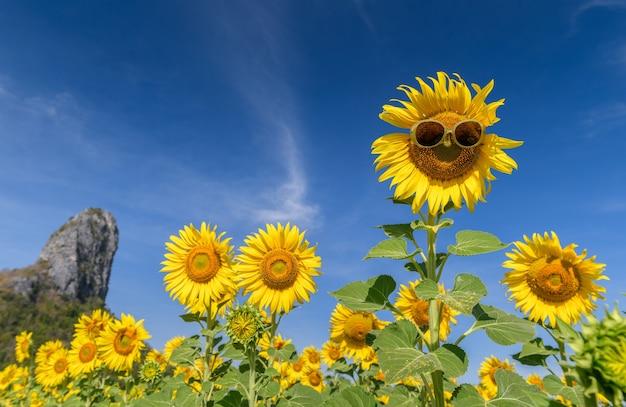 Girassol fofo usa óculos escuros e sorri com céu azul no campo de wunflower na província de lop buri, tailândia