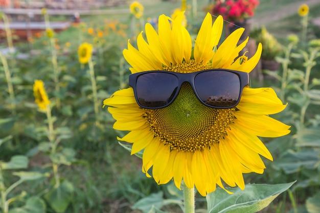 Girassol lindo com óculos de sol pretos de luz solar e no jardim.