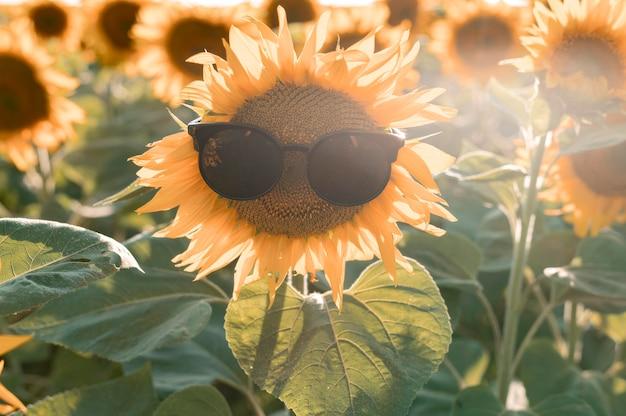 Girassol sorridente usando óculos escuros