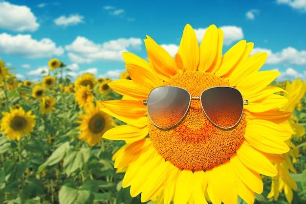 Girassol usando óculos escuros com campo de girassóis, céu azul nublado e luzes fortes do sol