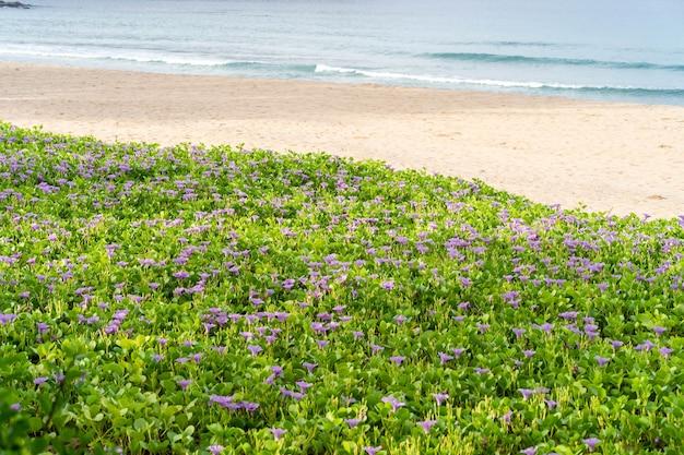 Glória da manhã crescente na praia.