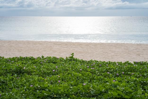 Glória da manhã crescente na praia. Foto Premium