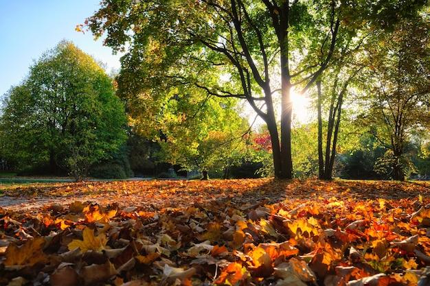 Golden outono outono outubro no famoso munique relax place englishgarten munchen bavaria alemanha