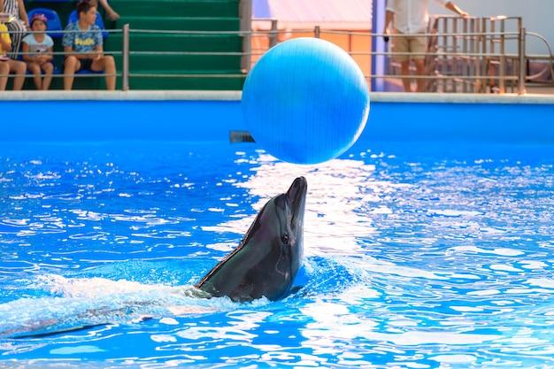 Golfinho brincando com uma bola na piscina. foto de alta qualidade