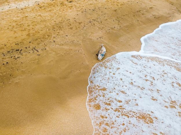 Golfinho morto expulso das ondas do mar.