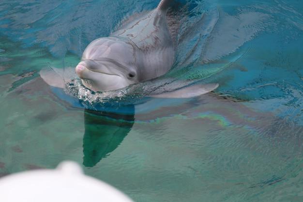 Golfinho no aquário