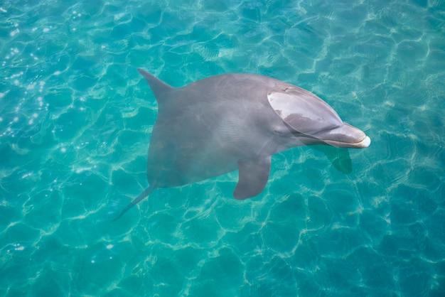 Golfinho no photomount da água de turquesa