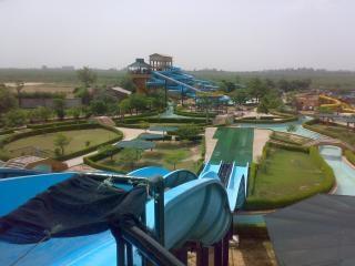 Golfinho parque aquático