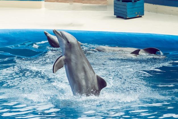 Golfinho pulando em uma exposição de salpicos de água