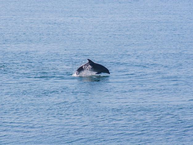 Golfinho pulando no fundo da água azul