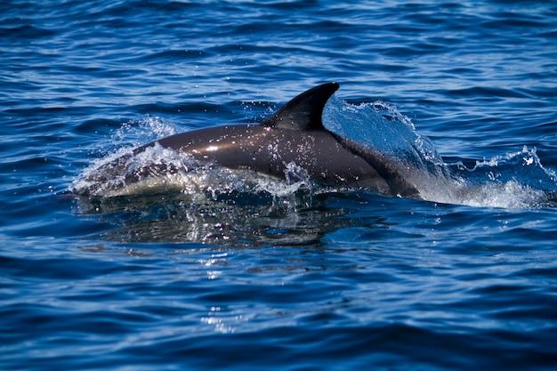Golfinhos selvagens