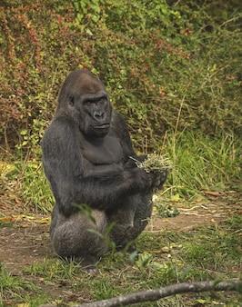 Gorila em pé segurando plantas