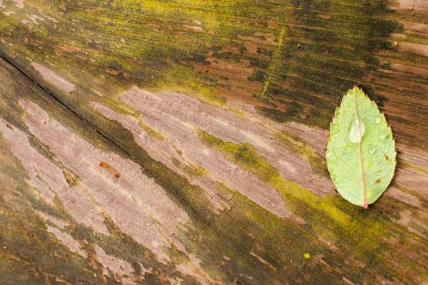 Gota d'água na folha verde, folha verde na madeira, fundo da natureza