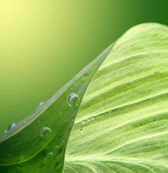 Gota de água e fundo de folha.