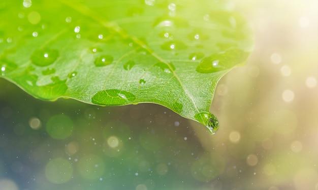 Gota de chuva em uma folha verde com bokeh. fundo natural