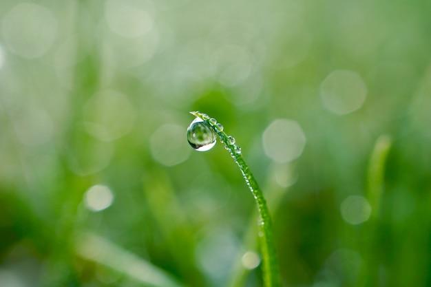 Gota de chuva na grama verde em dias chuvosos na temporada de inverno, fundo verde e brilhante
