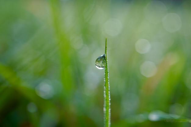 Gota de chuva na planta de grama verde na primavera