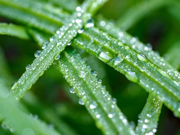 Gota na grama verde