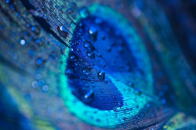 Gotas de água doce em fundo de penas de pavão