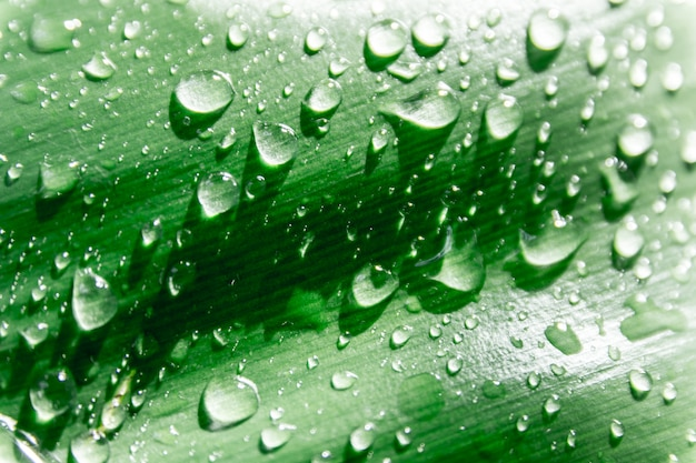Gotas de água em folhas verdes